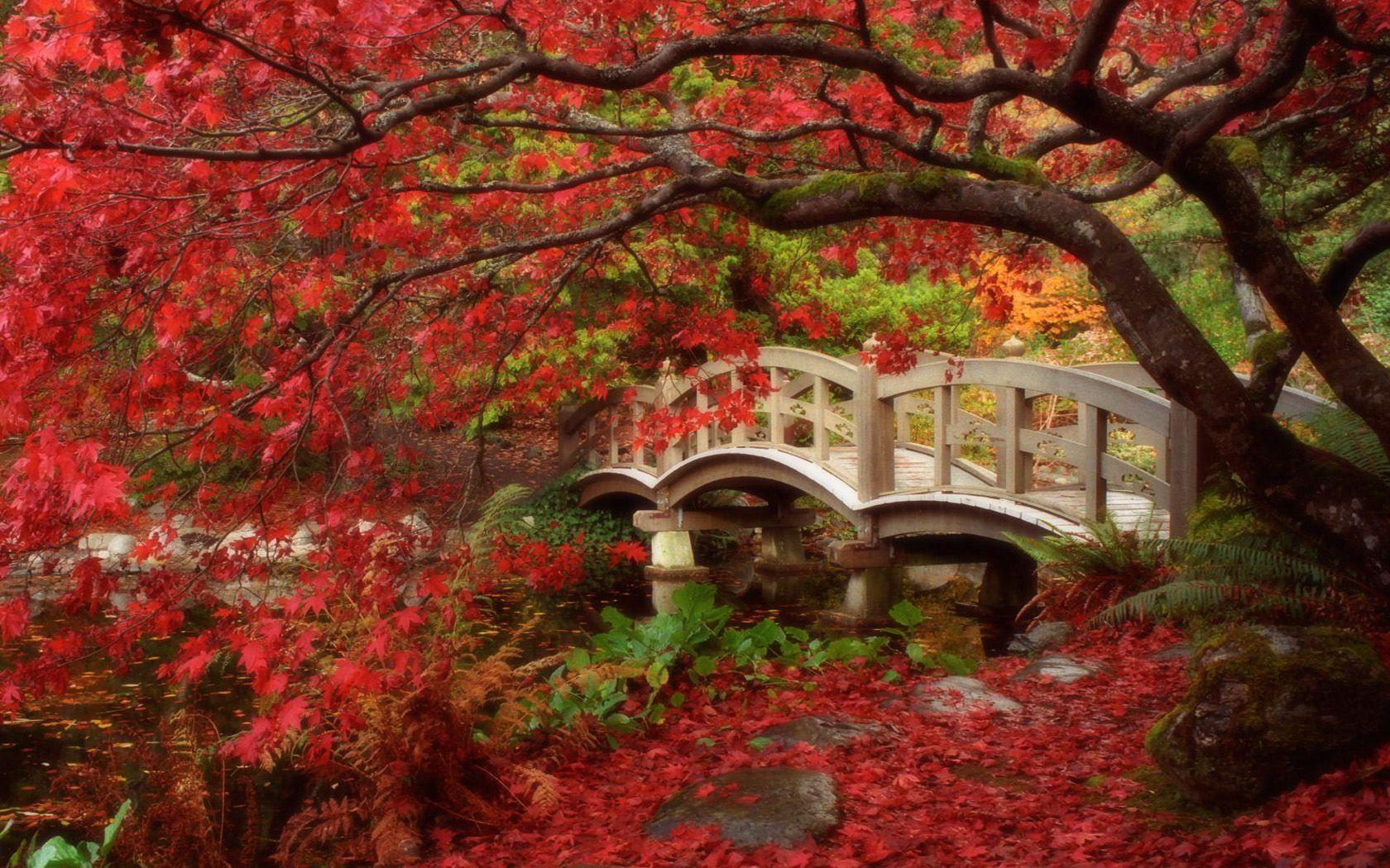 foto de Fond d'écran automne